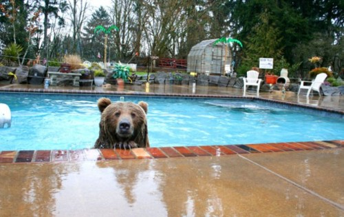Bear_pool